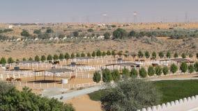 Arabische paardlooppas binnen paddock in de stofwoestijn timelapse, de V.A.E stock video