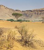 Arabische Wüste Lizenzfreie Stockfotografie