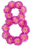 Arabische Ziffer 8, acht, von den Blumen der Chrysantheme, lokalisiert Stockfotografie