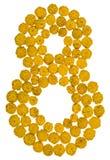 Arabische Ziffer 8, acht, von den gelben Blumen von Tansy, lokalisiert Stockfoto