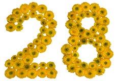 Arabische Ziffer 28, achtundzwanzig, von den gelben Blumen von buttercu Lizenzfreie Stockbilder