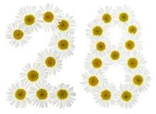 Arabische Ziffer 28, achtundzwanzig, von den weißen Blumen der Kamille Stockfotos