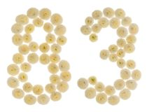 Arabische Ziffer 83, dreiundachzig, von den Sahneblumen von chrysanth Stockfotos