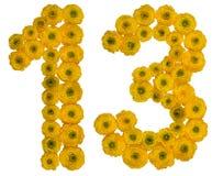 Arabische Ziffer 13, dreizehn, von den gelben Blumen der Butterblume, Lizenzfreies Stockbild