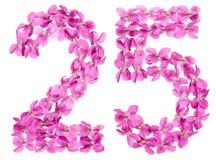 Arabische Ziffer 25, fünfundzwanzig, von den Blumen der Viola, lokalisiert Lizenzfreie Stockfotografie