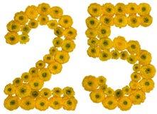 Arabische Ziffer 25, fünfundzwanzig, von den gelben Blumen der Butterblume Stockfotografie