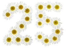 Arabische Ziffer 25, fünfundzwanzig, von den weißen Blumen der Kamille, Stockfotografie