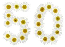 Arabische Ziffer 50, fünfzig, fünf, von den weißen Blumen der Kamille, Stockfotografie