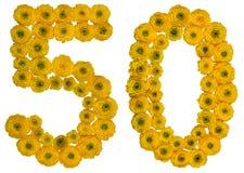 Arabische Ziffer 50, fünfzig, von den gelben Blumen der Butterblume, Isolator Stockfoto