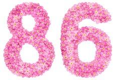 Arabische Ziffer 86, sechsundachzig, vom rosa Vergissmeinnicht blüht, Lizenzfreie Stockfotografie