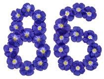 Arabische Ziffer 86, sechsundachzig, von den blauen Blumen des Flachses, isolat Stockfotos