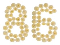 Arabische Ziffer 86, sechsundachzig, von den Sahneblumen von chrysanthem Stockbilder