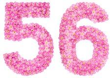 Arabische Ziffer 56, sechsundfünfzig, vom rosa Vergissmeinnicht blüht, i Lizenzfreies Stockfoto