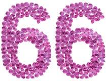 Arabische Ziffer 66, sechsundsechzig, von den Blumen der Flieder, an lokalisiert Lizenzfreie Stockbilder