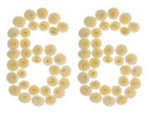 Arabische Ziffer 66, sechsundsechzig, von den Sahneblumen von chrysanthemu Lizenzfreie Stockfotografie