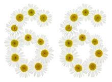 Arabische Ziffer 66, sechsundsechzig, von den weißen Blumen der Kamille, i Stockbilder