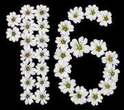 Arabische Ziffer 16, sechzehn, eine, sechs, von den weißen Blumen von Cera Lizenzfreie Stockfotos