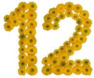 Arabische Ziffer 12, zwölf, von den gelben Blumen der Butterblume, ist Stockfoto