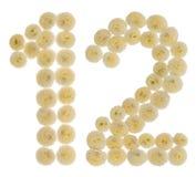 Arabische Ziffer 12, zwölf, von den Sahneblumen der Chrysantheme, Stockfotos