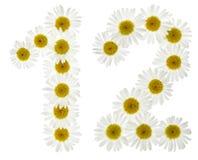 Arabische Ziffer 12, zwölf, von den weißen Blumen der Kamille, Isolator Stockfotografie