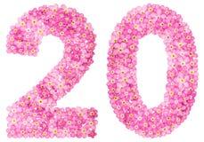 Arabische Ziffer 20, zwanzig, vom rosa Vergissmeinnicht blüht, Isolator Stockbilder