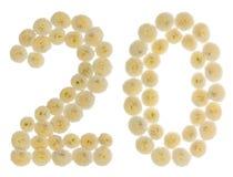 Arabische Ziffer 20, zwanzig, von den Sahneblumen der Chrysantheme, Lizenzfreies Stockbild