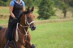 Arabischer Stallion lizenzfreie stockfotografie