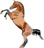 Arabisches Pferd stock abbildung