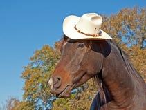 Arabisches Pferd, das einen Cowboyhut trägt Stockfotografie