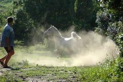 arabisk övande häst arkivfoto