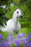 Arabisk häst i skog arkivbild