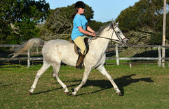 Arabisk häst med ryttaren Royaltyfri Fotografi