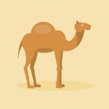 Arabisk kamel också vektor för coreldrawillustration Arkivfoto