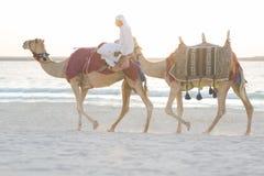 Arabisk man som rider kamel på stranden royaltyfri bild