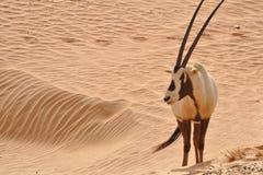 Djurlivdjur Arkivbild