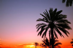 arabisk solnedgång Arkivfoto