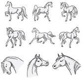 Arabiska hästar för trava Arkivbild