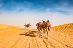 Arabiska kamel i öken av Abu Dhabi, U A E ,