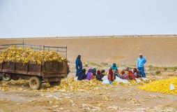 Arabiska kvinnor på arbete Arkivfoto