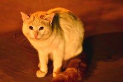 Arabiskt kattfoto genom att använda ottaljus i Dammam av Saudiarabien royaltyfria bilder