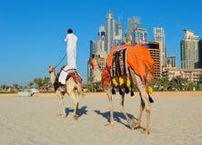 Arabiskt mansammanträde på en kamel på stranden i Dubai Arkivfoto