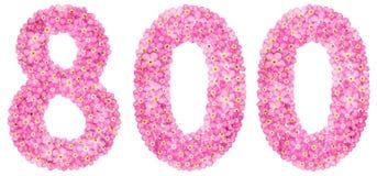 Arabiskt tal 800, åttahundra, från rosa förgätmigejflowe arkivbild