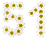 Arabiskt tal 51, femtio en, från vita blommor av kamomillen, I Arkivfoton