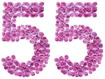 Arabiskt tal 55, femtiofem, från blommor av lilan, isolerade nolla Royaltyfri Bild