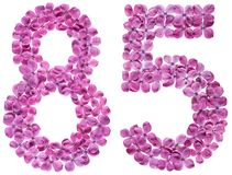 Arabiskt tal 85, femtiofem, från blommor av lilan som isoleras Royaltyfri Foto