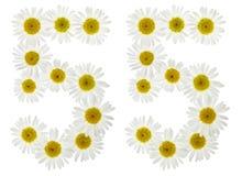 Arabiskt tal 55, femtiofem, från vita blommor av kamomillen, Arkivbild