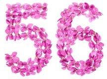 Arabiskt tal 56, femtiosex, från blommor av altfiolen som isoleras på Royaltyfri Fotografi