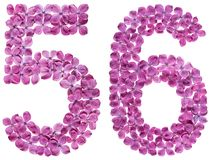 Arabiskt tal 56, femtiosex, från blommor av lilan som isoleras på Royaltyfri Bild