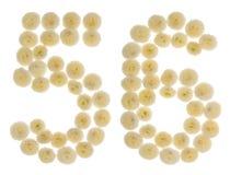 Arabiskt tal 56, femtiosex, från kräm- blommor av chrysanthemuen Royaltyfri Fotografi
