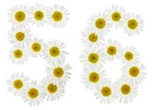 Arabiskt tal 56, femtiosex, från vita blommor av kamomillen, I Royaltyfri Bild
